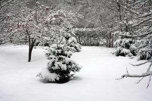 Arbres sous la neige en hiver
